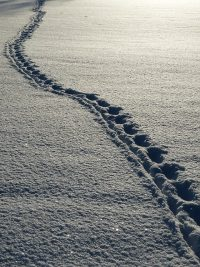 marche echauffement ce slim neige