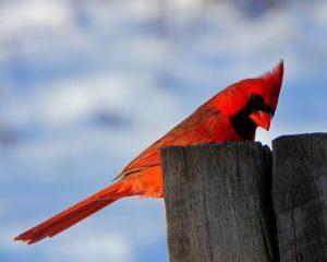 oiseau printemps ce slim